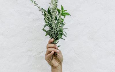 Want to buy Cheap Herbs in Hong Kong? 8 Picks!