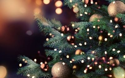 Where to Buy Christmas Trees in Hong Kong