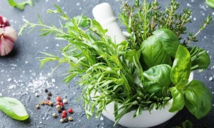 Buying Herbs in Hong Kong – The 8 Stores We Love