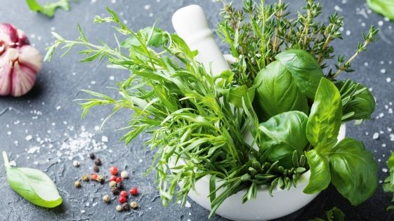 8 Best Stores for Buying Herbs in Hong Kong