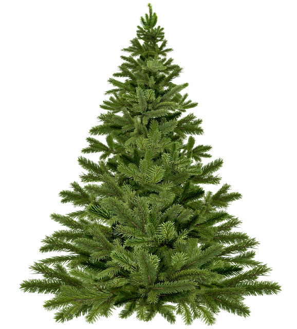 Looking to buy Christmas trees in Hong Kong? We have you covered.