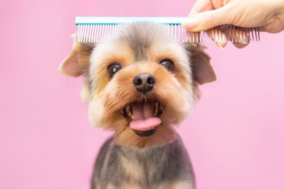 A Guide to Dog Grooming